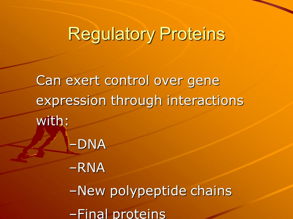 Regulatory Proteins Can exert control over gene expression through interactions with: DNA. RNA. New polypeptide chains.