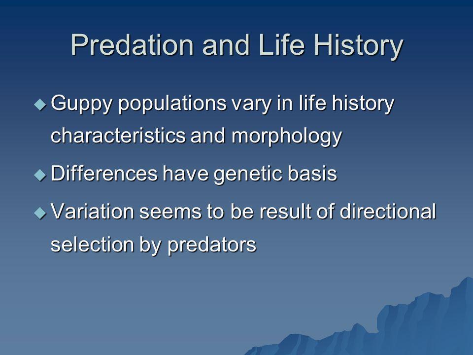 Predation and Life History