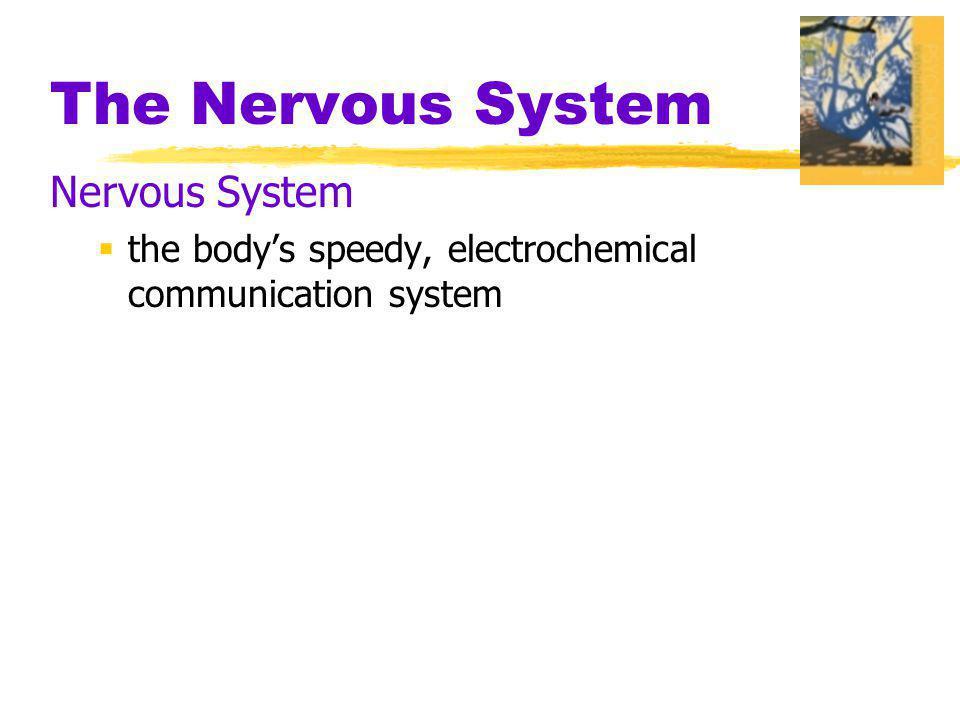 The Nervous System Nervous System
