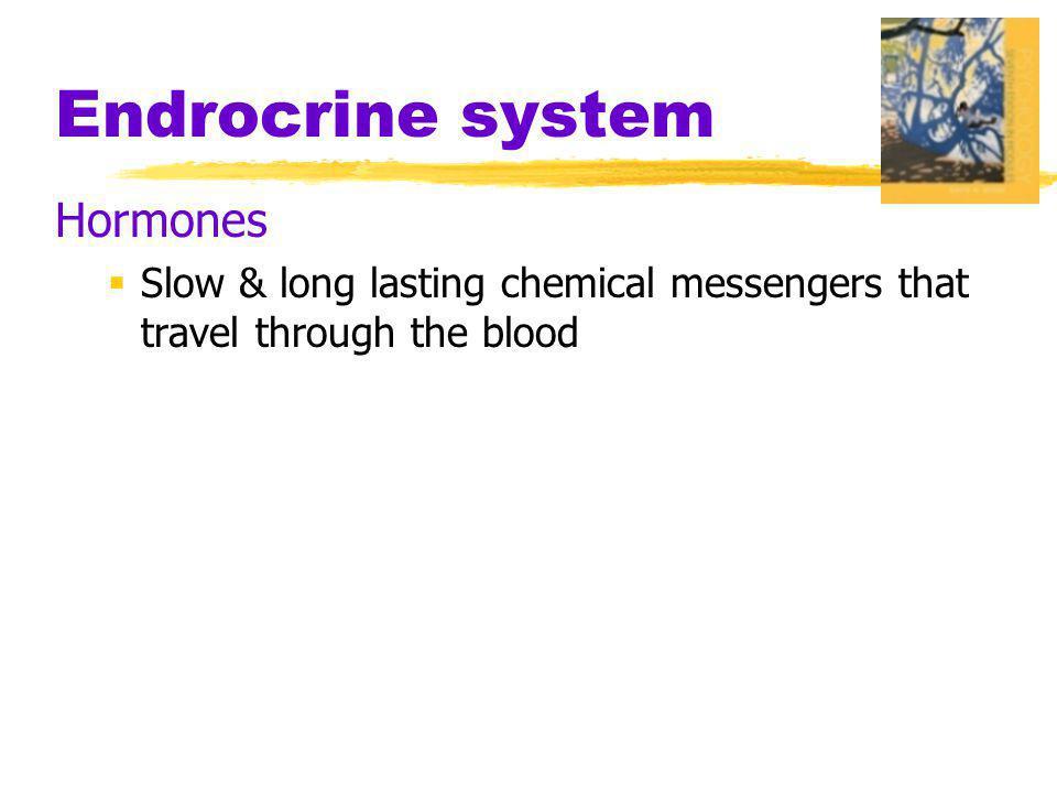 Endrocrine system Hormones