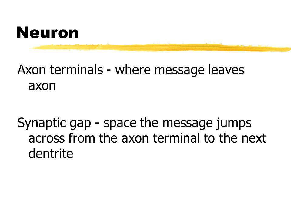 Neuron Axon terminals - where message leaves axon