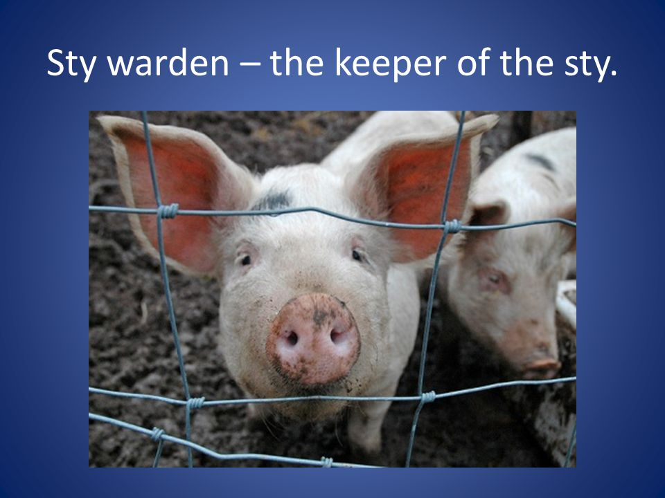 Sty warden – the keeper of the sty.