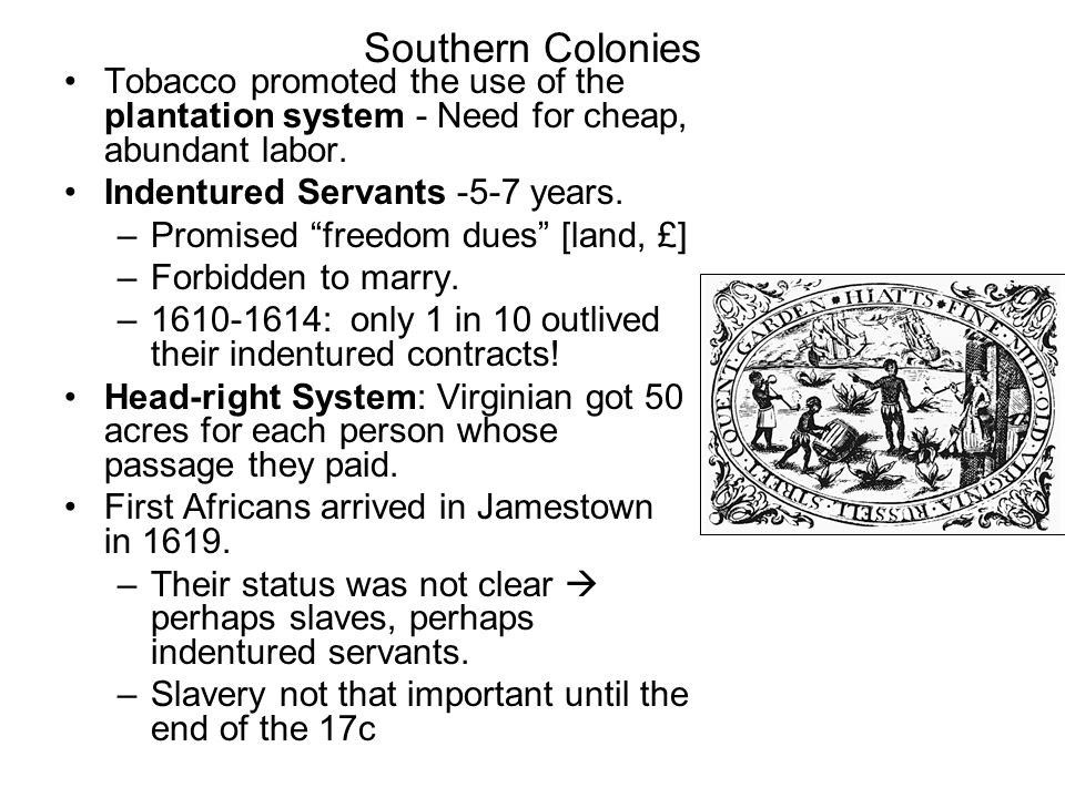 Southern Colonies Tobacco promoted the use of the plantation system - Need for cheap, abundant labor.
