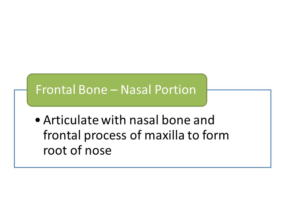 Frontal Bone – Nasal Portion