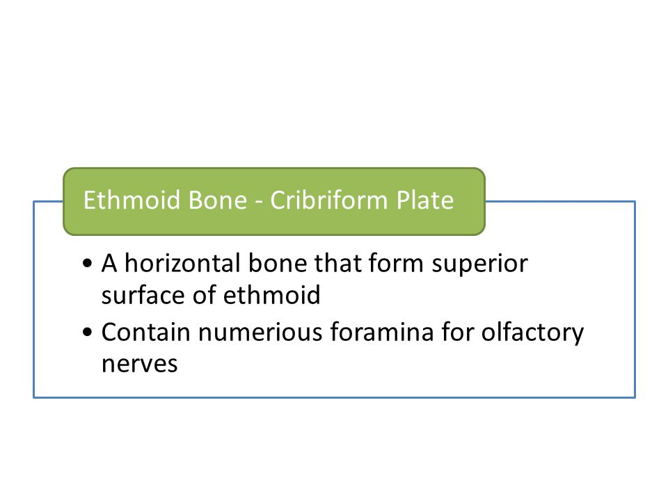 Ethmoid Bone - Cribriform Plate