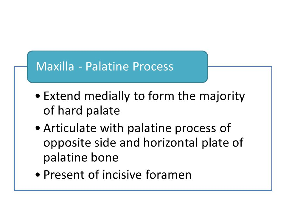 Extend medially to form the majority of hard palate