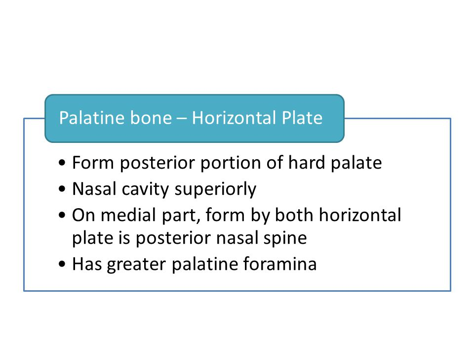 Form posterior portion of hard palate