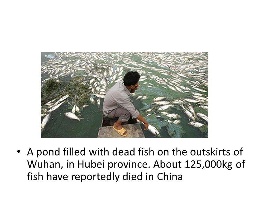 A pond filled with dead fish on the outskirts of Wuhan, in Hubei province.