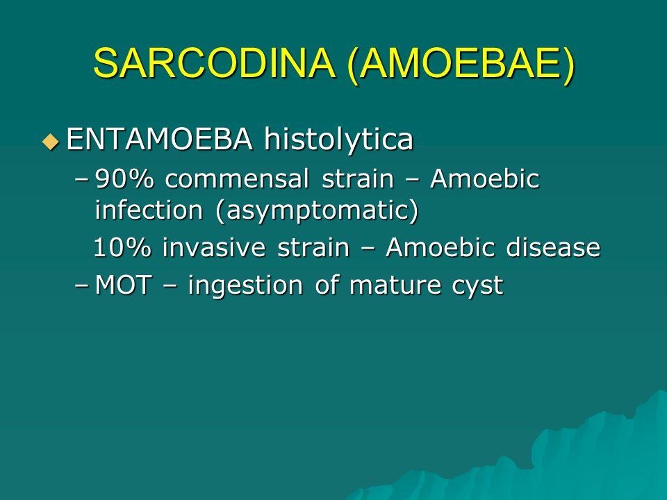 SARCODINA (AMOEBAE) ENTAMOEBA histolytica