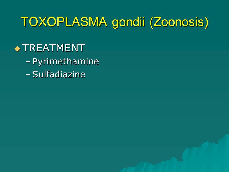 TOXOPLASMA gondii (Zoonosis)