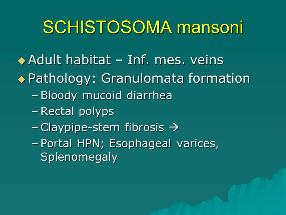 SCHISTOSOMA mansoni Adult habitat – Inf. mes. veins