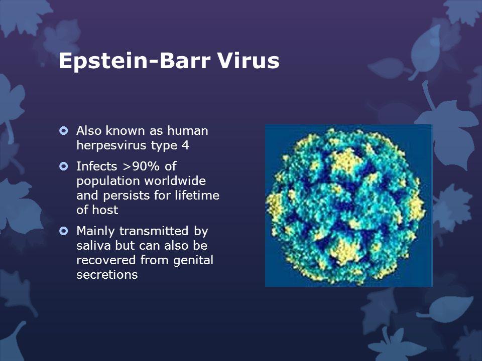 Epstein-Barr Virus Also known as human herpesvirus type 4