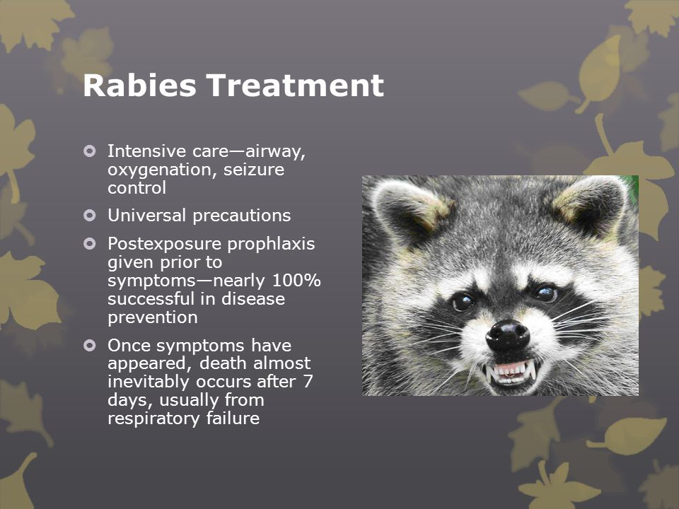 Rabies Treatment Intensive care—airway, oxygenation, seizure control