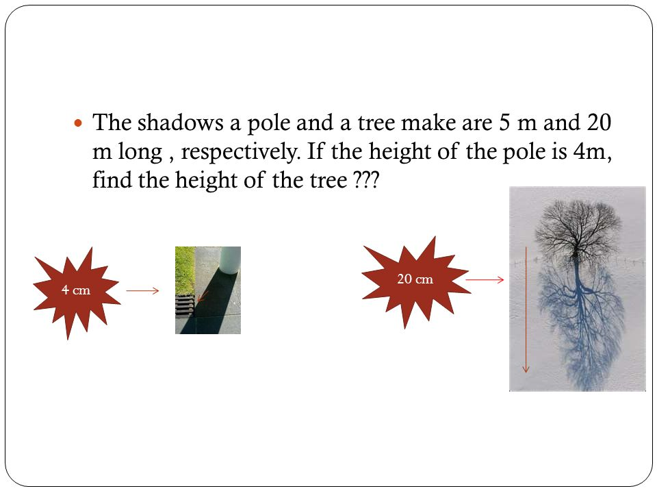 The shadows a pole and a tree make are 5 m and 20 m long , respectively. If the height of the pole is 4m, find the height of the tree