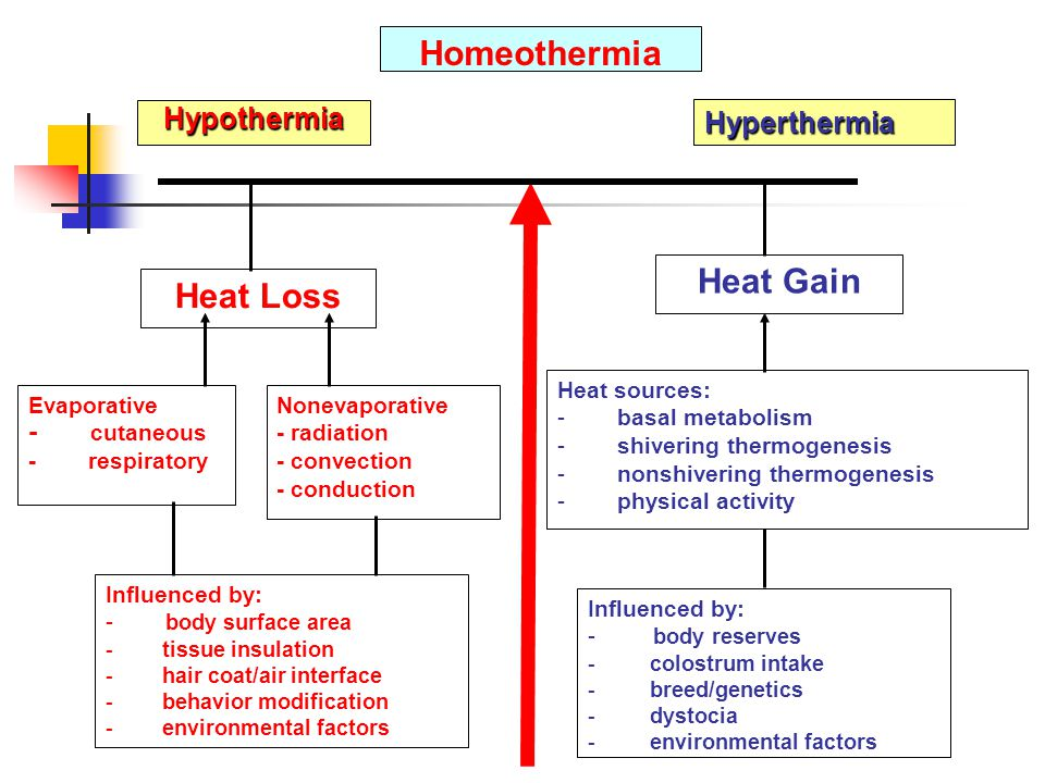 Heat Loss Heat Gain Homeothermia