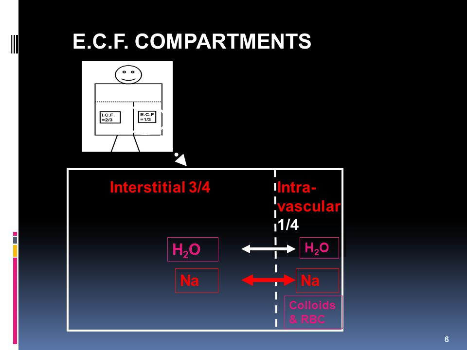 E.C.F. COMPARTMENTS Interstitial 3/4 Intra-vascular1/4 H2O Na Na H2O