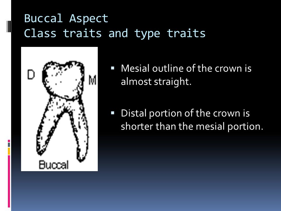 Buccal Aspect Class traits and type traits
