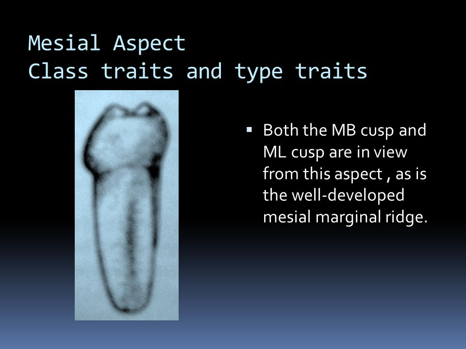 Mesial Aspect Class traits and type traits