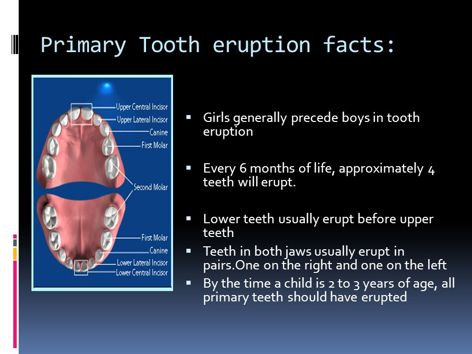 Primary Tooth eruption facts: