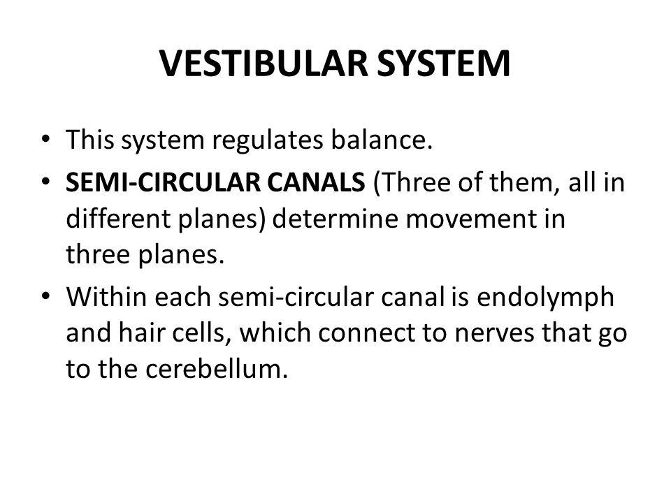 VESTIBULAR SYSTEM This system regulates balance.