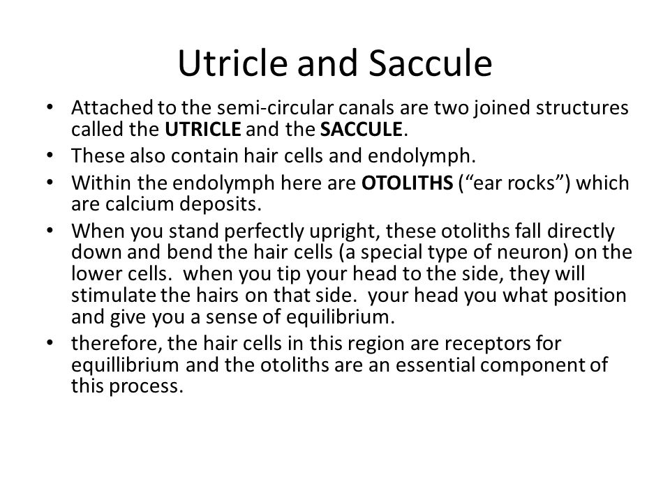 Utricle and Saccule Attached to the semi-circular canals are two joined structures called the UTRICLE and the SACCULE.