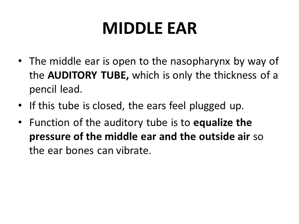 MIDDLE EAR The middle ear is open to the nasopharynx by way of the AUDITORY TUBE, which is only the thickness of a pencil lead.