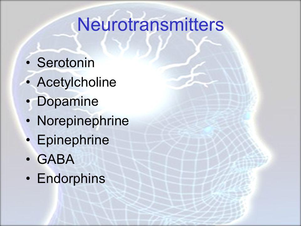 Neurotransmitters Serotonin Acetylcholine Dopamine Norepinephrine
