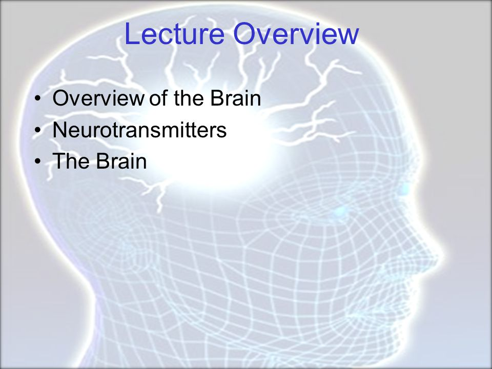Lecture Overview Overview of the Brain Neurotransmitters The Brain