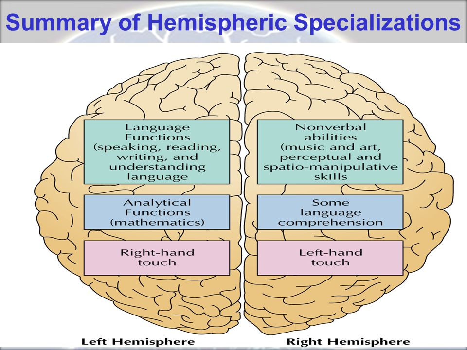Summary of Hemispheric Specializations