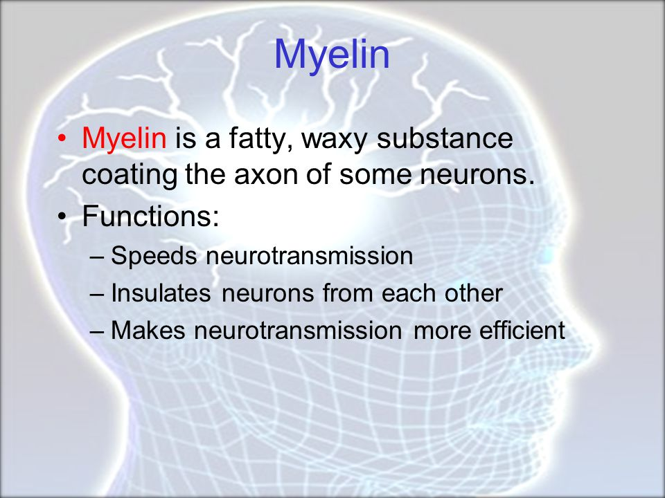 Myelin Myelin is a fatty, waxy substance coating the axon of some neurons. Functions: Speeds neurotransmission.
