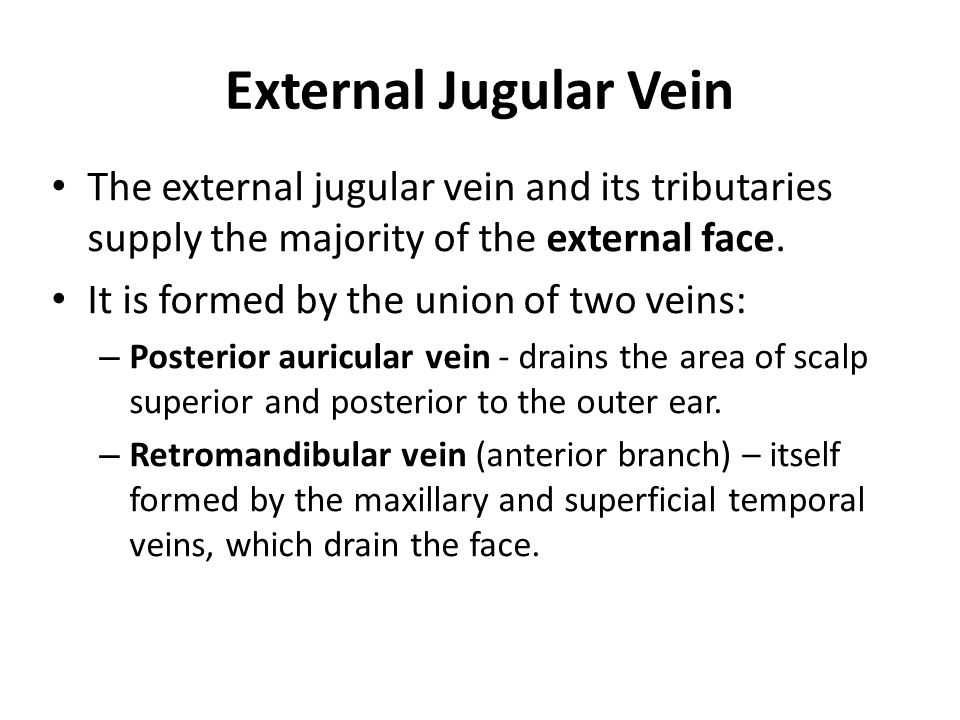 External Jugular Vein The external jugular vein and its tributaries supply the majority of the external face.