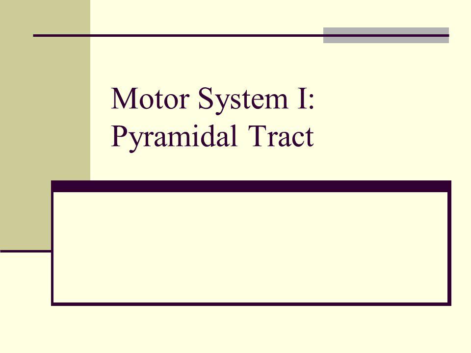 Motor System I: Pyramidal Tract