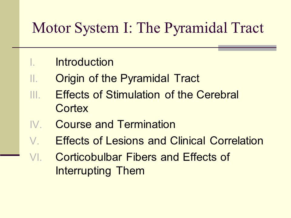 Motor System I: The Pyramidal Tract