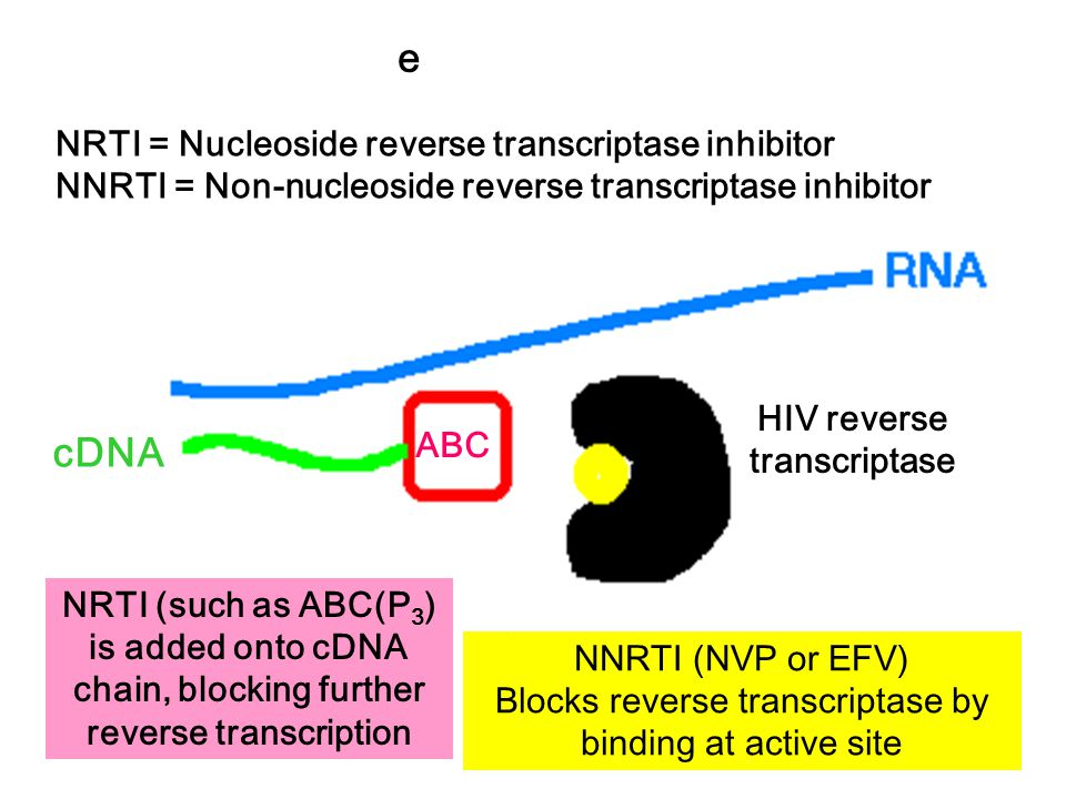 Mechanism of reverse transcriptase inhibitors cDNA