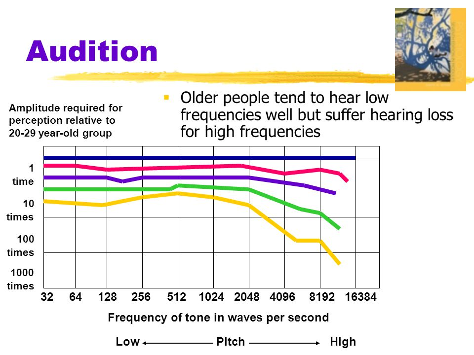 Audition Older people tend to hear low frequencies well but suffer hearing loss for high frequencies.