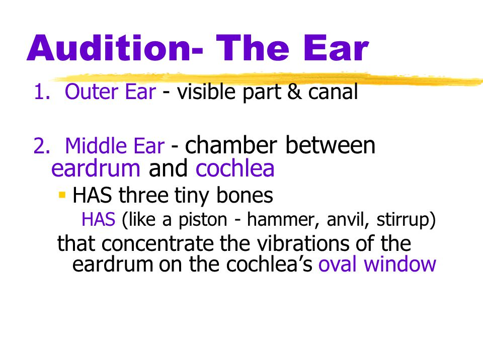 Audition- The Ear 1. Outer Ear - visible part & canal