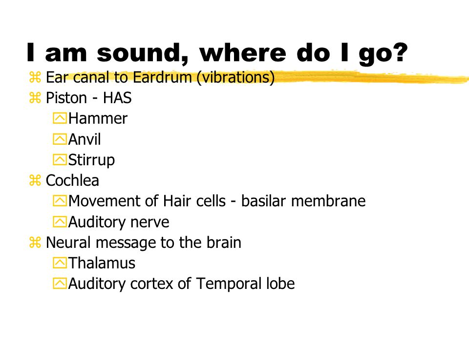 I am sound, where do I go Ear canal to Eardrum (vibrations)