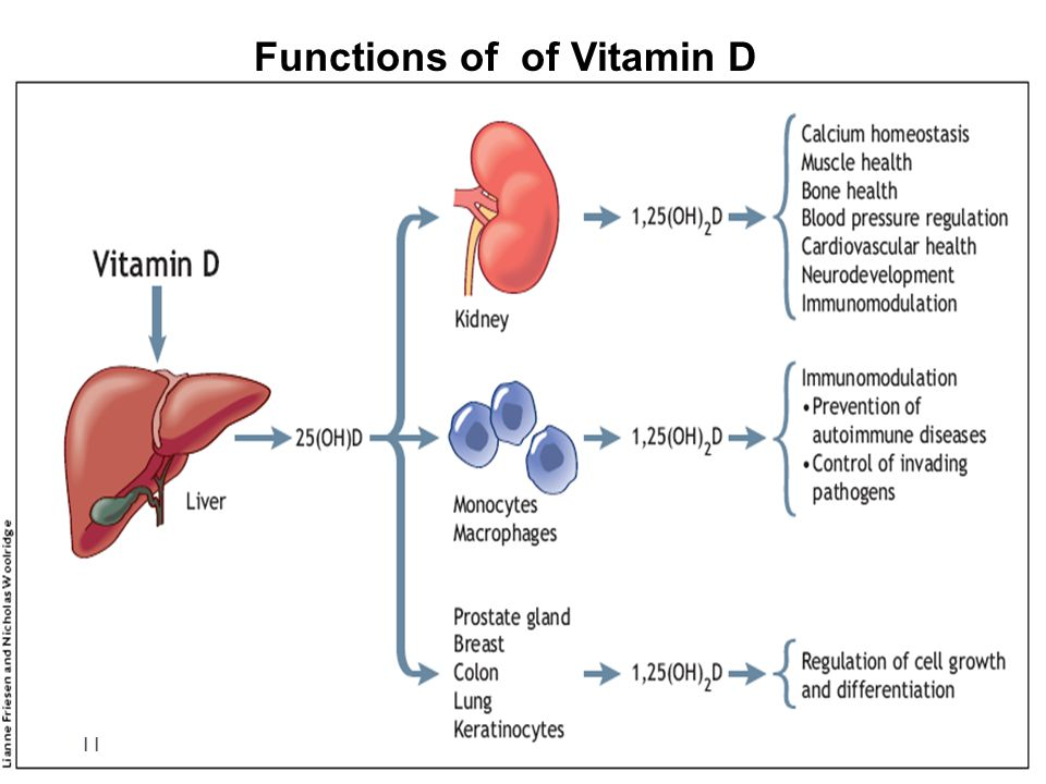 Functions of of Vitamin D