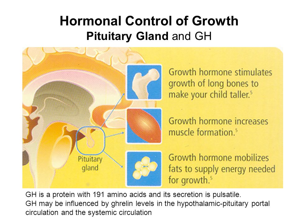 Hormonal Control of Growth Pituitary Gland and GH