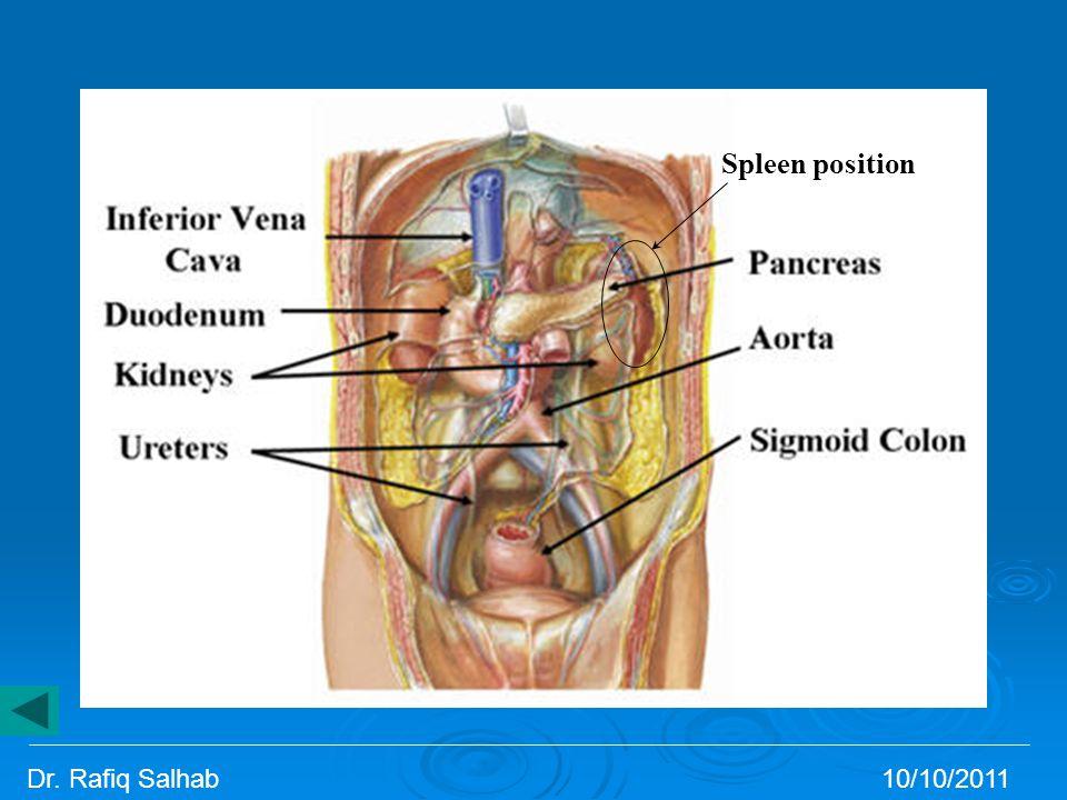 Spleen position Dr. Rafiq Salhab 10/10/2011