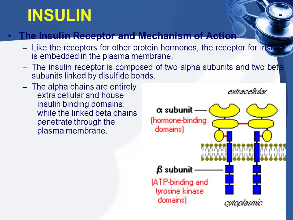 INSULIN The Insulin Receptor and Mechanism of Action