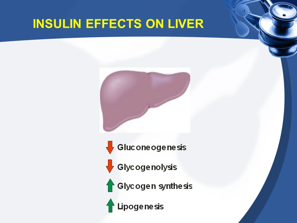 INSULIN EFFECTS ON LIVER