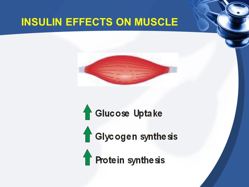 INSULIN EFFECTS ON MUSCLE