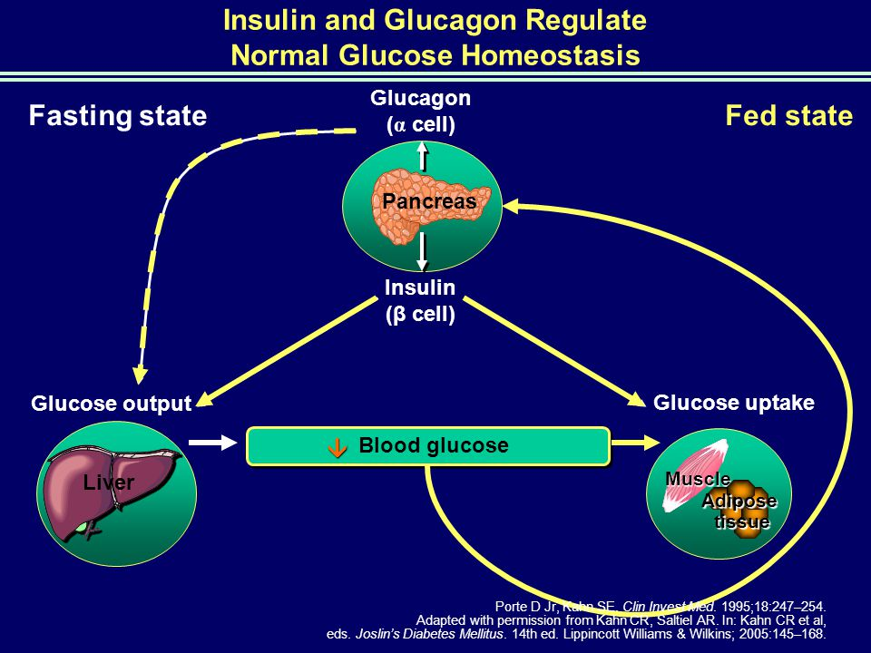 Insulin and Glucagon Regulate Normal Glucose Homeostasis
