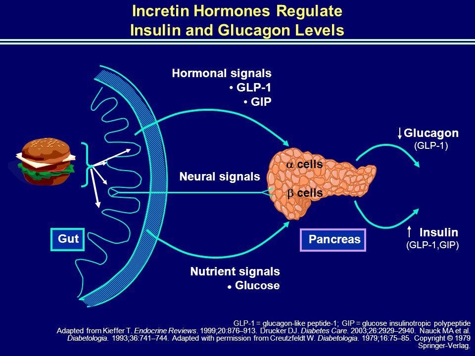 Incretin Hormones Regulate Insulin and Glucagon Levels