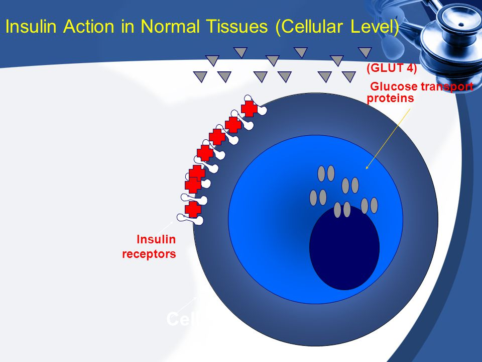 Insulin Action in Normal Tissues (Cellular Level)