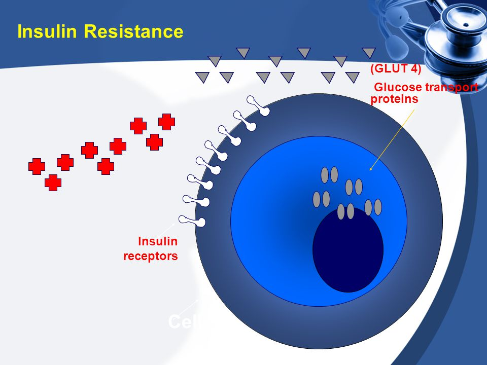 Insulin Resistance Cell (GLUT 4) Glucose transport proteins