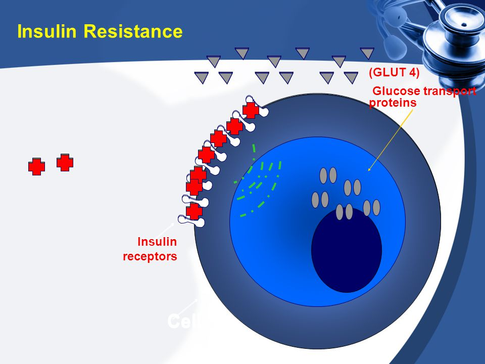 Insulin Resistance Cell Cell (GLUT 4) Glucose transport proteins