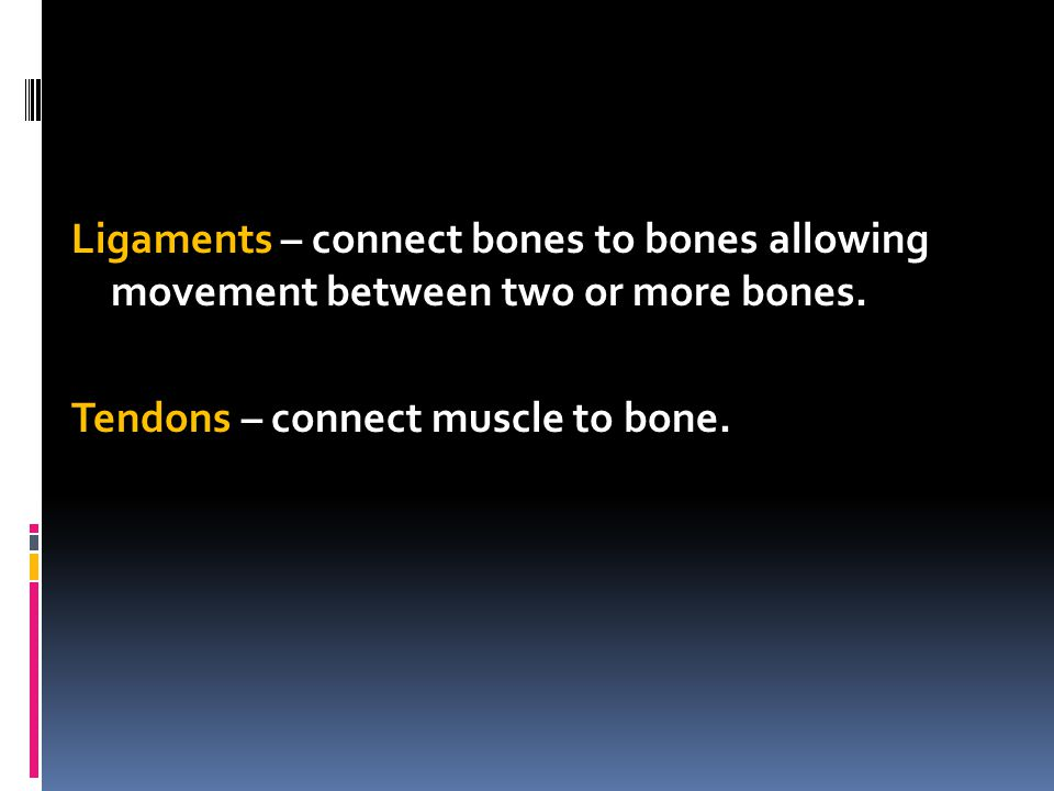 Ligaments – connect bones to bones allowing movement between two or more bones.