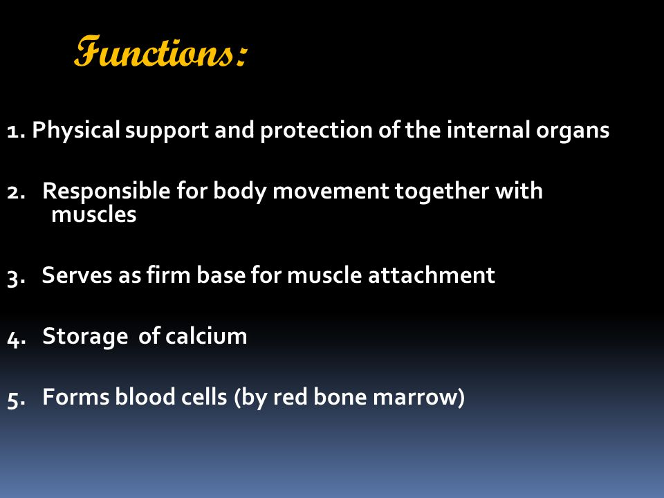 Functions: 1. Physical support and protection of the internal organs
